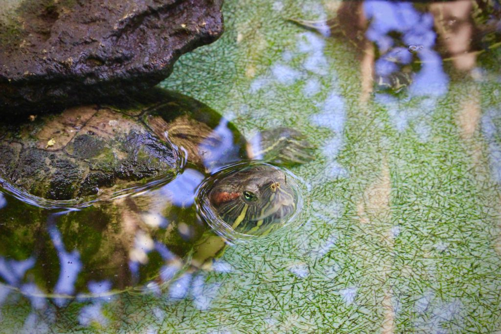 V Mazunte uvidít všechny možné druhy želv