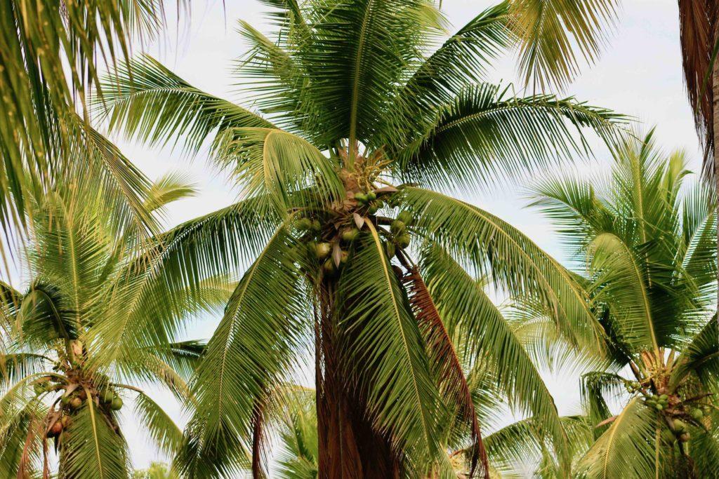 kokos ventanilla mexiko